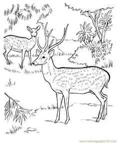 deer coloring pictures to print free printable coloring