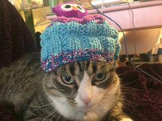 Ravelry: karahendy's Top This! Hat