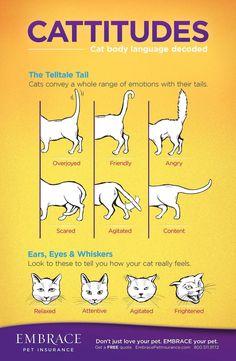 Talking Cat Language