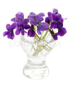 Violets in a vase. on Colourbox