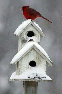 cabane à oiseaux deux nichoirs blancs et un oiseau rouge