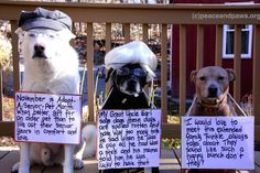 Tip #296  www.peaceandpaws.org Paws Rescue, All Dogs, Animal Rescue, Labrador Retriever, Dog Cat, Adoption, Pets, Day, Funny