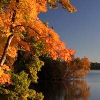 2014 Fall Color Report from the official Wisconsin Tourism site. Find optimum locations for spectacular hues and scenery with our peak fall foliage map!