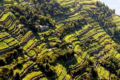 An amazing view of terraced vineyards along the Cinque Terre coast in Liguria. Cinque Terre, Italy Vacation, Italy Travel, Places In Italy, Places To Go, Vacation Memories, Regions Of Italy, Italian Wine, Lake Como