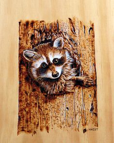 canadian Art of pyrography | Raccoon Pyrography