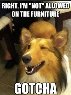 Funny animal humor dogs lustige tierhumorhunde dr les d animaux humour chiens perros divertidos de humor animal funny animal humor hilarious funny animal humor lol funny animal humor awkward moments funny animal humor cute funny animal humor dogs Funny Dog Memes, Funny Animal Memes, Cute Funny Animals, Funny Cute, Pet Memes, Funny Puppies, Funny Dog Pics, Happy Animals, Funny Cartoons