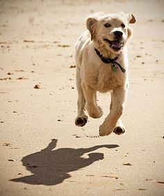 weeeeeee...... i can fly! | Flickr - Photo Sharing!
