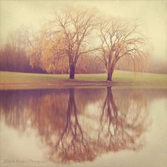 Willow Trees Portrait