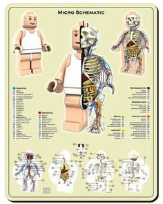Lego biology. I'm buying this for me and Aiden!!! :D