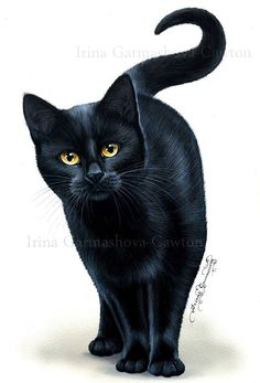 Black Cat Print In Amber Eyes by Irina Garmashova - Cats Love I Love Cats, Crazy Cats, Cool Cats, Image Chat, Amber Eyes, Gatos Cats, Beautiful Cats, Beautiful Pictures, Cat Art