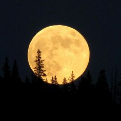 Full moon over Pine forest; N of Topaz Mountain, Pike NF, E of Fairplay, CO by Lon, via Flickr