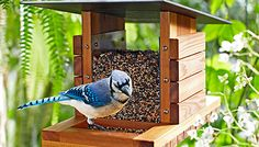 Google Image Result for http://www.lowes.com/creative-ideas/images/2011_05/Bird-Watch_101698698_web.jpg
