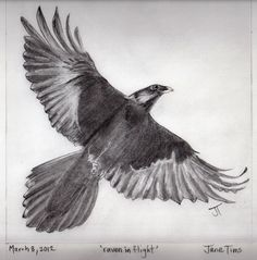 Pencil Drawings Of Raven Related Keywords & Suggestions - Pencil Drawings Of Raven Long Tail Keywords Raven Tail, Raven Wings, Bird Wings, Wings Drawing, Crow Art, Crows Ravens, Pencil Drawings, Artsy, Birds