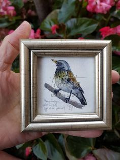 Tiny Fieldfare Giclée Print Bird Migration, Southern Europe, North Africa, British Isles, Bird Prints, Printing Process, Giclee Print, Watercolor Paintings, Digital Prints