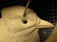 East Meets West: Carving the Eastern Blue Jay | wildfowl-carving.com