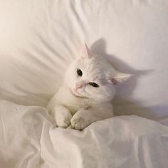 I love cute cats and kittens 'cuz they bring me happiness. Animals And Pets, Baby Animals, Cute Animals, Cute Kittens, Cats And Kittens, I Love Cats, Crazy Cats, Bb Chat, Cat Aesthetic
