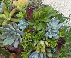 Live Succulent Wreath Square Succulent Wreath 15 by tobieanne