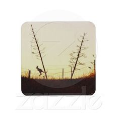 Hopping into the setting sun drink coaster