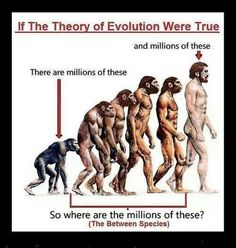 Évolution ou création ???