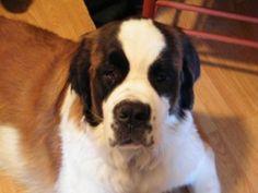 www.adventureswithbernie.com Organizations, Dogs, Animals, Animais, Animales, Animaux, Pet Dogs, Organizing Clutter, Doggies