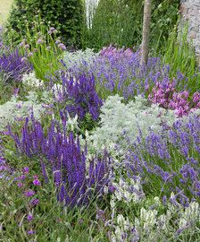 Gartenprojekte The purple bed A Stroke. Lavender Garden, Purple Garden, Colorful Garden, Garden Shrubs, Garden Plants, Garden Landscaping, Sun Garden, Perennial Grasses, Sun Perennials