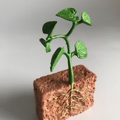 The Life Cycle of a Green Bean Plant figurines provide a side view of what is going on underground! Ideal to explain the various stages of growth in plants to small children. Cycle Of Life, Life Cycles, Green Bean Seeds, Bean Plant, Deck Of Cards, Kids House, Botany, Green Leaves, Plants