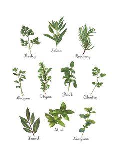 Herbs Collection als Leinwandbild von Miles of Light | JUNIQE