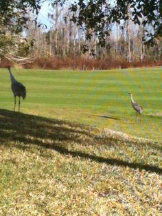 North Shore Golf Course #9 in Orlando, FL