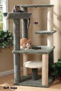 Cool Cat Clubhouse
