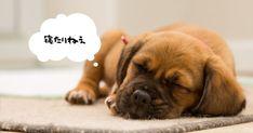 老犬の睡眠時間はなぜ長いのか。寝なさすぎる場合や寝過ぎる場合って? - いぬのみみ Brown Puppies, Cute Puppies, Puppy Backgrounds, Itchy Dog, Sleepy Dogs, Sleeping Puppies, Pet Dogs, Pets, Dog Sweaters