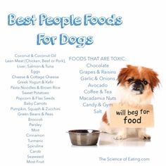 31 healthiest people food for dogs! And a break down of each one and its benefits