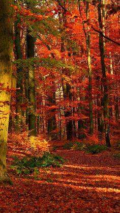 through autumn forests...