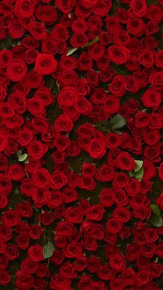 IPhone Wallpapers Red Wallpaper Flower Iphone Rooms
