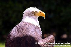 Castlefest 2013 Local Wildlife 9   Flickr - Photo Sharing!