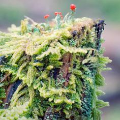 Nature photography print of moss and lichens growing on a tree stump on the forest floor by Allison Trentelman.