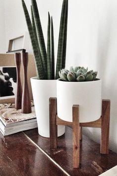 Как красиво разместить цветы в квартире: 15 идей – Вдохновение