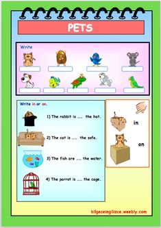 UNIT-8 (PETS) - Bilgeceingilizce English Worksheets For Kindergarten, 2nd Grade Worksheets, Worksheets For Kids, English Course, English Class, Learn English, Color Unit, Grade 1, Vocabulary