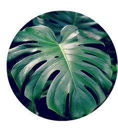 Pasning af de trendy planter