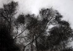 charcoal trees - Google Search