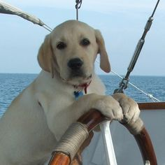 I'm off cruising today, talking about pets with PandO. Sadly no pets on my cruise :(