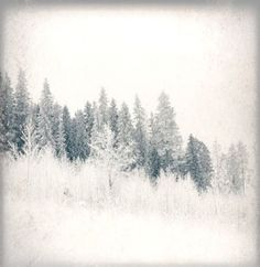 . Start Of Winter, Seasons Of The Year, Reference Images, Winter Is Coming, Nature Photography, Trees, Earth, Texture, Animales
