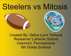 Steelers vs Mitosis