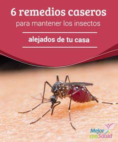6 remedios caseros para mantener los insectos alejados de tu casa Por más hábitos de limpieza que mantengamos a diario, los insectos siempre buscarán la forma de habitar muchos de los rincones de la casa.