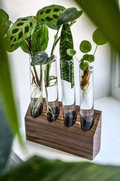 27 Best Test tube planters images in 2019 | Test tubes, Test tube