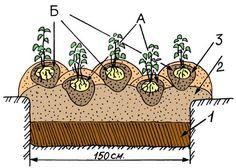 Китайский метод посадки картофеля обеспечивает невероятную урожайность Небольшая Ферма, Садоводство, Растения, Газированные Напитки
