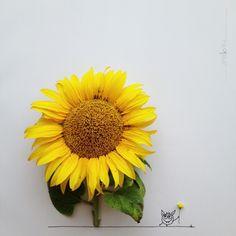 sunflower, yeah.