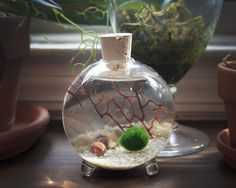 Enjoy exclusive for Marimo Moss Ball Glass Globe Terrarium online - Wehaveover Terrariums, Marimo Moss Ball Terrarium, Water Terrarium, Terrarium Ideas, Water Bongs For Sale, Glass Globe, Sea Glass, Low Lights, House Plants