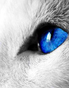 500px / Photo Blue Cat Eye Reflection by cheryl smith~cl