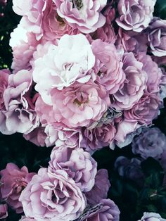 Spring Wallpaper, Apple Wallpaper, Flower Wallpaper, Wallpaper Backgrounds, Iphone Wallpaper, Types Of Flowers, Pink Flowers, Beautiful Flowers, Apple Flowers
