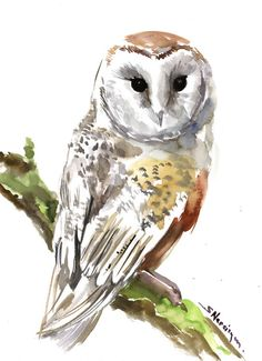 Barn Owl Original watercolor painting 15 x 11 in by ORIGINALONLY